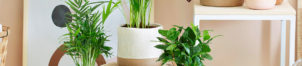 Perfect Plant Deal : Vive les plantes !
